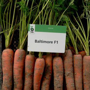 Marchew Baltimore F1