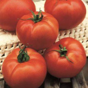 pomidor Hector