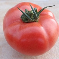 pomidor HTP