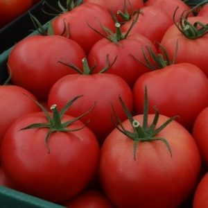 pomidor tomimaru muchoo