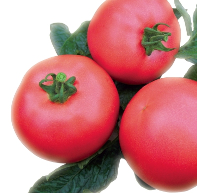 pomidor VP1