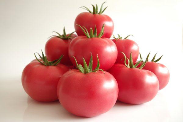 pomidor manistella