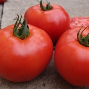 pomidor zadurella