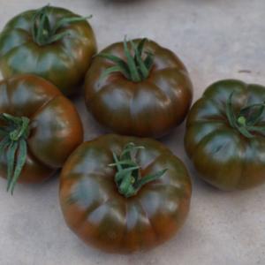 pomidor bucanero
