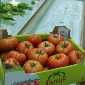 pomidor edamso