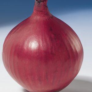 Cebula Red Baron