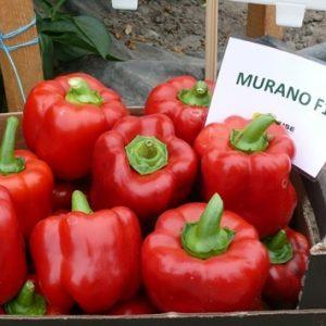 Papryka Murano F1