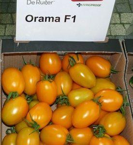 pomidor orama