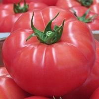 pomidor rapanui