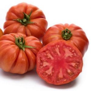 pomidor bocamegra