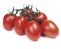 pomidor reva