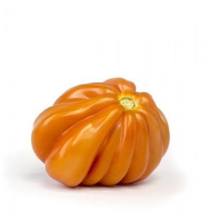pomidor rugantino