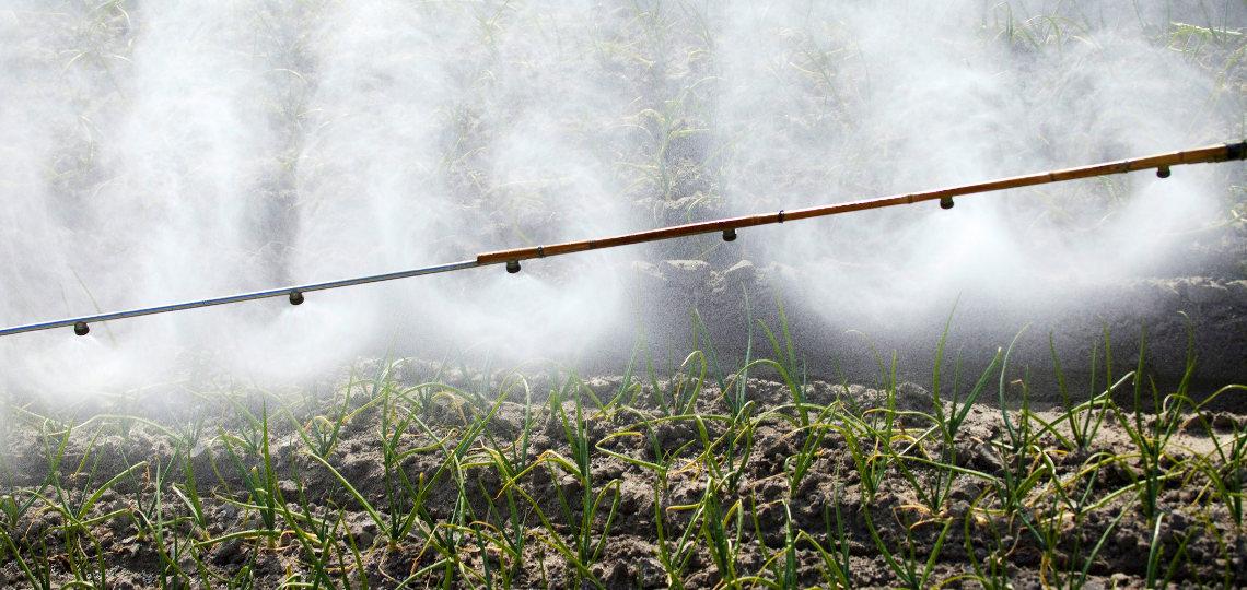 stosowanie herbicydów przy uprawie cebuli