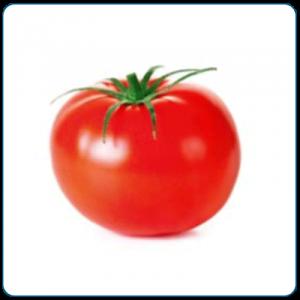 pomidor alceste