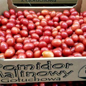 pomidor clavellina